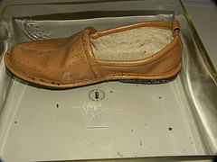 bed bugs and droppings present on shoe