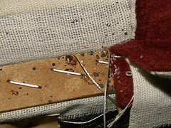 bed bugs living in box spring