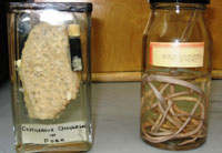 Preserved samples for parasitology visual reference library
