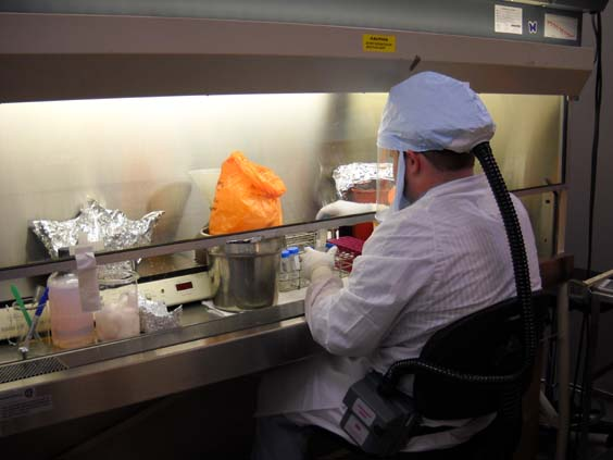 Laboratorian working in a biosafety cabinet